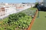 Huertos urbanos: tipos de huertos en las ciudades y sus beneficios