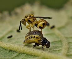 Enemigos Naturales de las Plagas del Huerto: Guía Completa