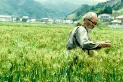 Masanobu Fukuoka en cultivo de cereal en su granja