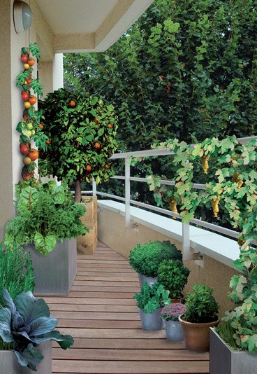 Crea tu huerto en el balcón