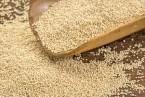 Amaranto, ¿Cómo cultivarlo? Siembra, cuidados y cosecha