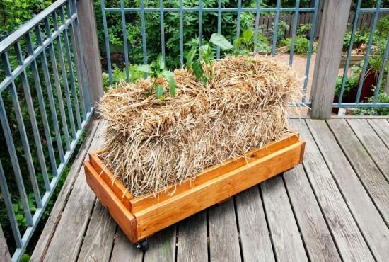 También podemos cultivar sobre balas de paja en nuestro balcón