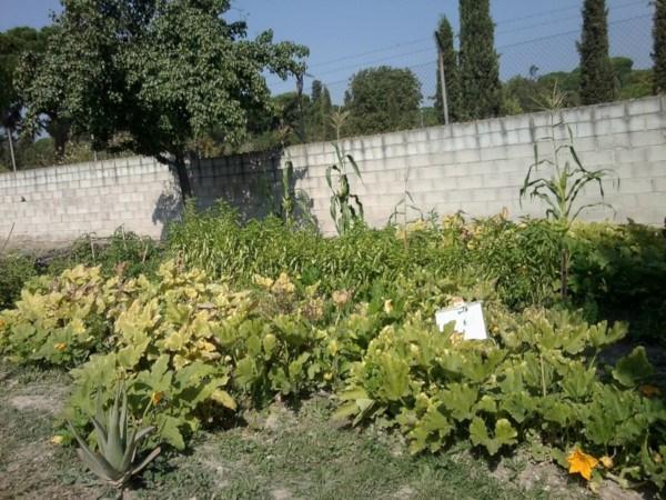 Cultivos en el huerto del IES Barajas