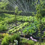 7 Hortalizas para cultivar en verano: Todo lo que debes saber