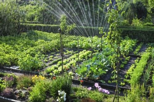 Mezcla de plantas en el huerto