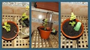 Riego en Vacaciones: 3 sistemas sencillos para regar las plantas