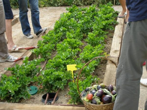 Huerto del Centro de Educación Ambuental de El Retiro (Fuente: www.actividadesambientalesretiro.com)