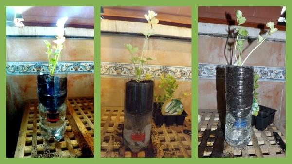 Las tres variantes de maceta con autorriego fabricadas con botellas de plástico recicladas