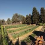 Huerto de Agrofogones. Visitando Huertos