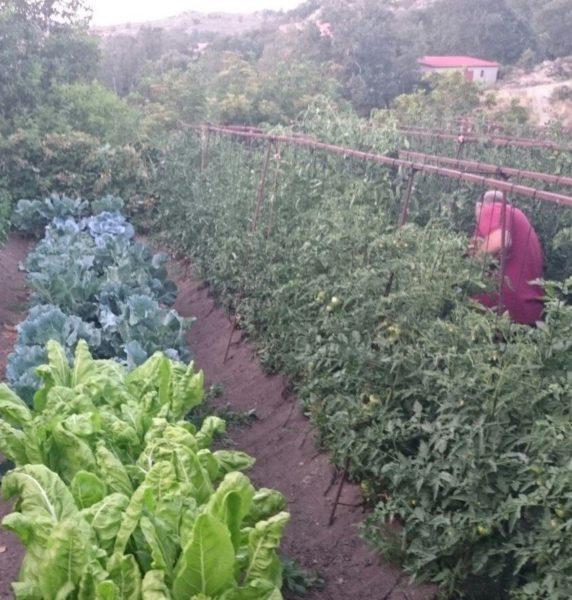 Huerto ecológico en Navarrevisca