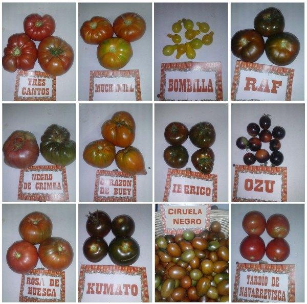 Variedades de Tomates ecológicos