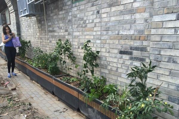 Agricultura Urbana en China