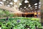 K11 urban farming. Huertos en centros comerciales