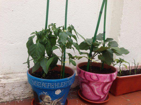 recipientes de cultivo del macetohuerto