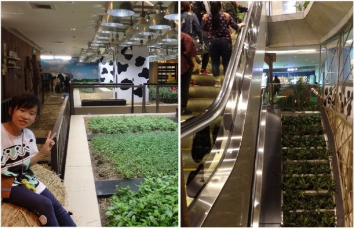 Planta dedicada a la Agricultura Ecológica en el edificio K11 de Shanghai