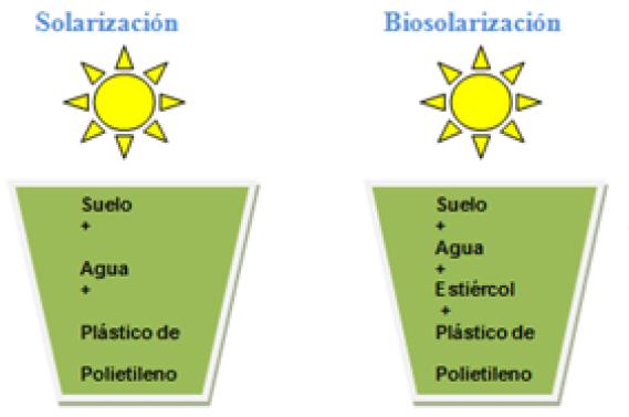 Solarización y biosolarización, diferencias. Desinfección ecológica con cubiertas plásticas