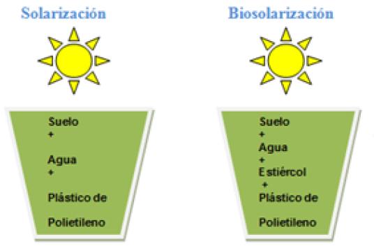 Técnica de biosolarización