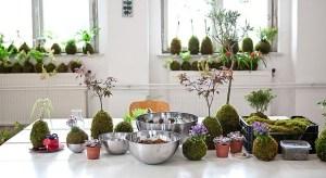 Qué son las Kokedamas: Cómo hacer Kokedamas con plantas
