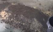 Compost Bocashi para abonar el huerto: Guía completa