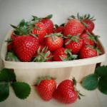 Cómo plantar Fresas y Fresones en Macetas: Guía Completa