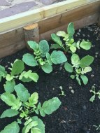 Plagas o Enfermedades en la Jardinera: ¿Qué puede ser?