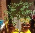 Huerto en Jardineras: Cómo hacer un huerto en poco espacio