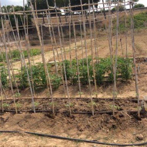 cultivo ecológico en Sant Pere de Ribes