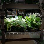 Huertos con poco sol: Qué plantas del huerto requieren poca luz