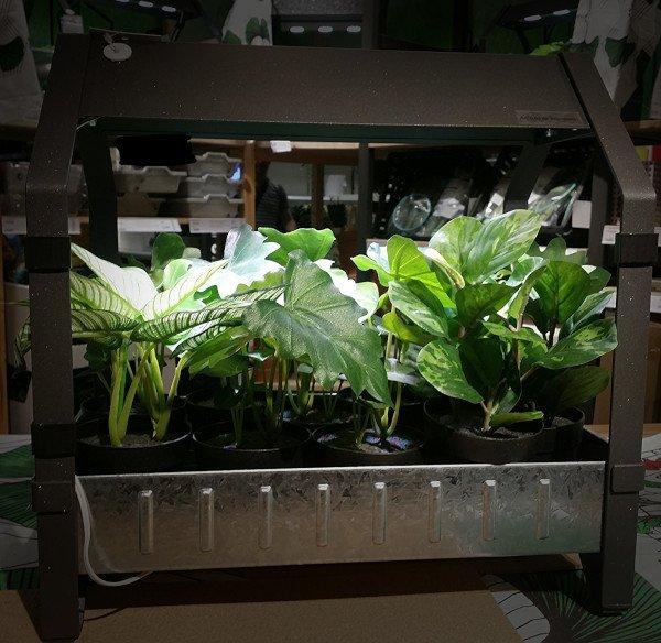 Cultivo en interior