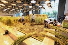 Un huerto en la Oficina: Agricultura Urbana en Japón