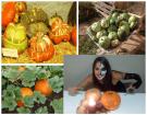 Calabazas: 6 Tipos de calabaza o variedades y para qué se utilizan