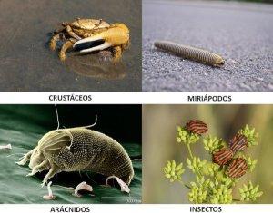 Diferencia entre ácaro e insecto: ¿Qué bicho tengo en mis plantas?