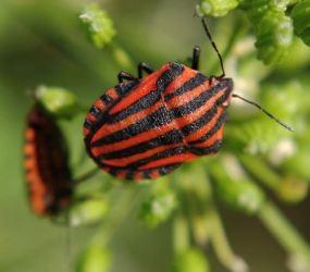 Bichos rojos en las plantas: Guía completa con fotos