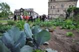 Agricultura Urbana en Alemania. Huertos urbanos en Andernach y Berlín