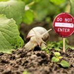 Barreras naturales para controlar plagas y enfermedades
