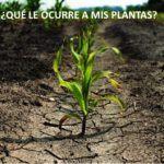 TIPOS DE ESTRÉS EN LAS PLANTAS DEL HUERTO