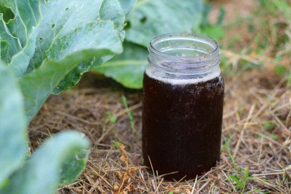 compost tea como abono orgánico