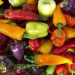 Tipos de Pimientos: Las 5 variedades más cultivadas en el huerto