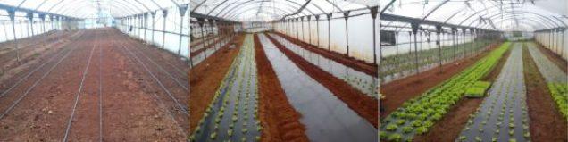 cuidar las plantas: mulching de plástico