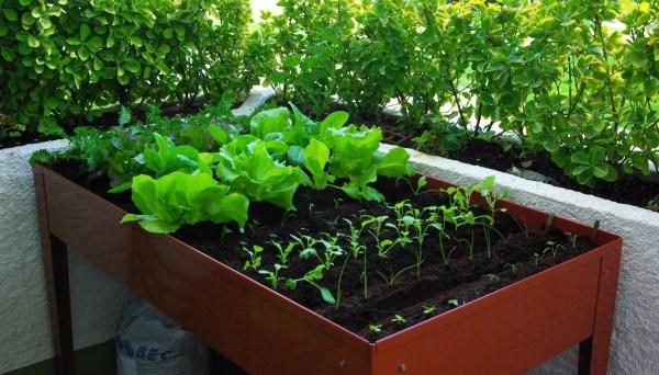 distancias de siembra y plantación en mesas de cultivo