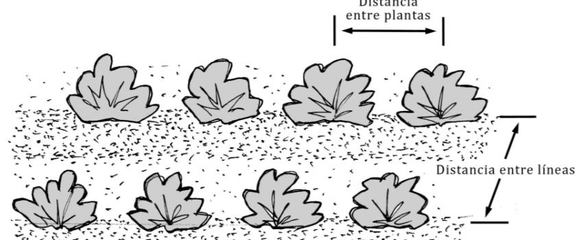 Qué es el marco de plantación