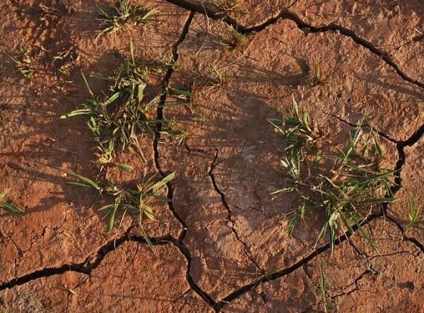 Deshidratación de las plantas provocada por estrés hídrixo.