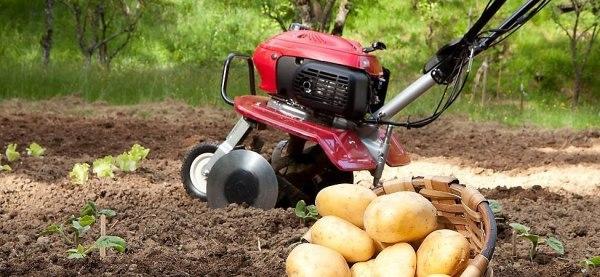 motoazada para labrar el suelo del huerto