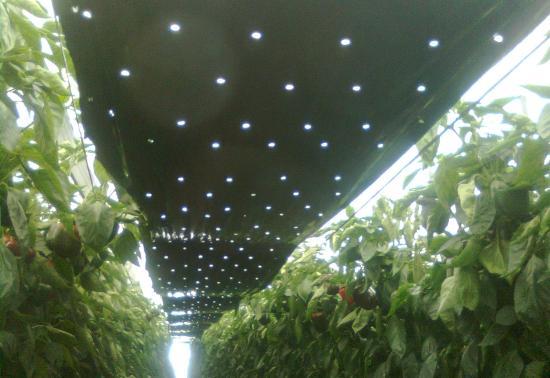 sombreado parcial en cultivos
