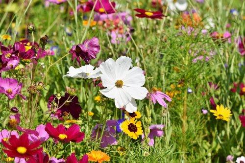 plantas beneficiosas para el huerto