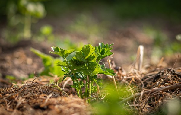laboreo de conservación para cuidar el suelo