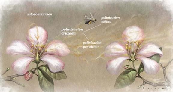 Tipos de polinización