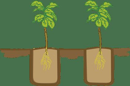Profundidad de siembra de las semillas ¿Cómo plantar hortalizas?