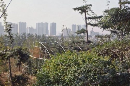 beneficios de los huertos urbanos