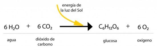 Reacción química de la fotosíntesis en las plantas